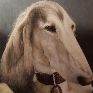 Oz the Saluki dog