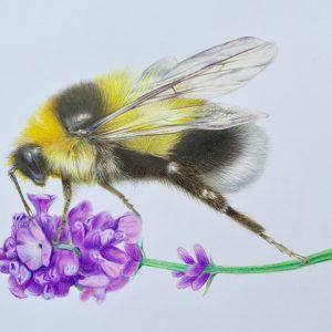 Bummblebee